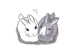 rabbits1.JPG